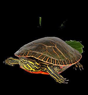 splash reptile